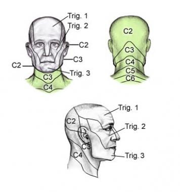 Dermatomes of the head, face, and neck.