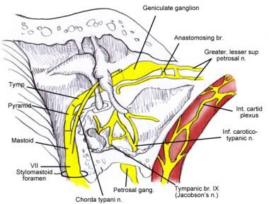 Relation of the chorda tympani to the ossicular ch