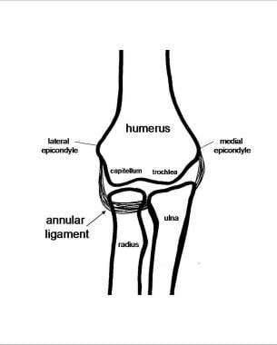 Elbow anatomy with annular ligament.