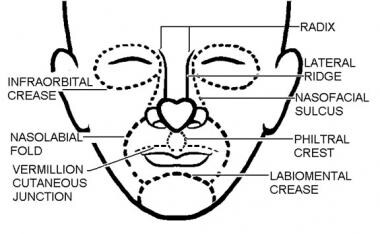 Cosmetic subunits. Illustrated by Charles Norman.