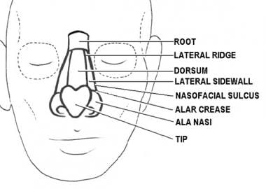 Subunits of the nose. Illustrated by Charles Norma