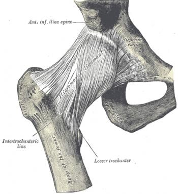 Hip ligaments.