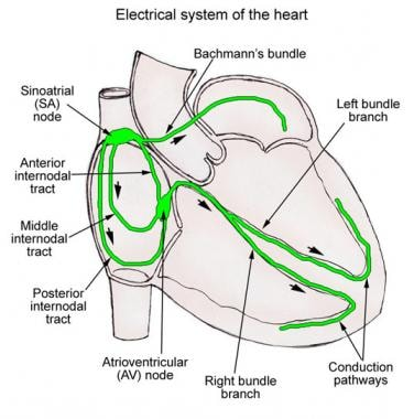Schematic illustration of the cardiac conduction s