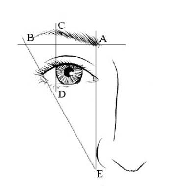 An aesthetic brow. A-B Lateral brow is at or above
