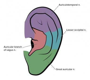 Anatomy of sensory nerves in the external ear.