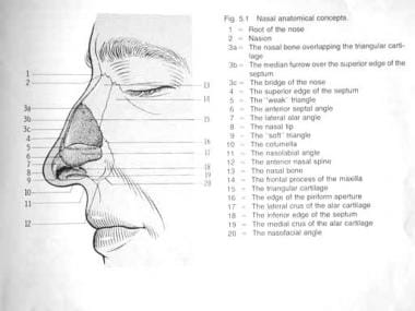 Nasal anatomy. Image used with permission.