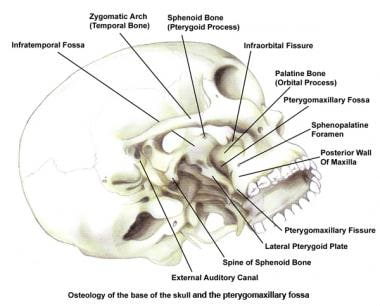 Osteology of the base of the skull and the pterygo