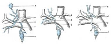 Terminal collecting trunks of the right side. a =