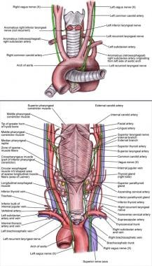 Tracheal blood supply. Right anterior view.