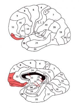 The orbitofrontal cortex. Adapted from an image fr