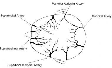 The 5 pairs of arteries that supply the scalp.