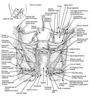 Anatomy of structures related to female urogenital