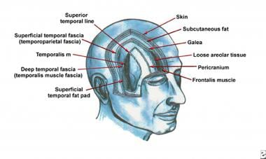 The fascial planes of the forehead and temple. The