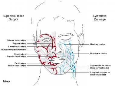 Blood supply and lymphatic drainage of the face.