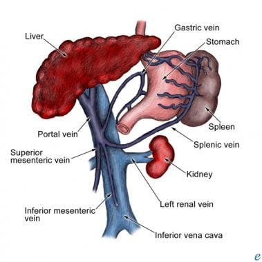 Portal vein and associated anatomy.