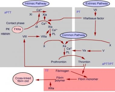 Prothrombin time chart.