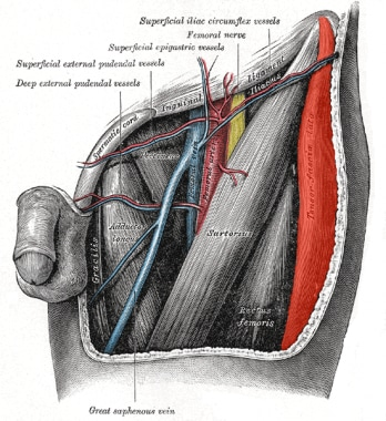 Frontal view of hip area, showing femoral vein, ne