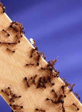 Fire ants. US Department of Agriculture. Courtesy