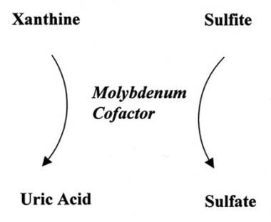 Molybdenum cofactor deficiency.