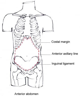Boundaries of the anterior abdominal wall.