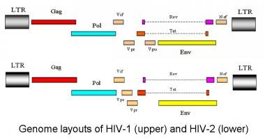 Genome layout of human immunodeficiency virus (HIV