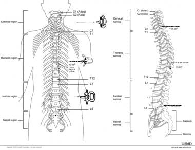 Typical placements for cervical, thoracic, and lum