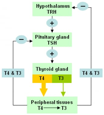 The hypothalamic-pituitary-thyroid axis. Levels of