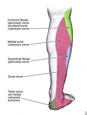 Dermatome of the superficial peroneal nerve at the