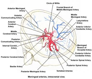 Schematic drawing of the circle of Willis as found