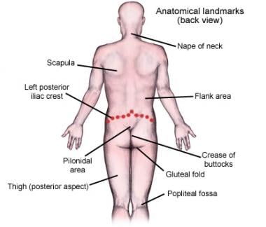 Anatomical landmarks (back view).