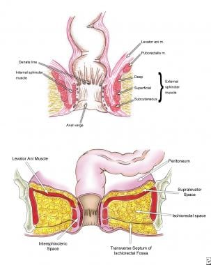 Anatomy of the anal canal and perianal space.