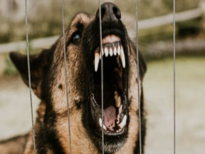 Rabid Dog Imported Into US Sparks Multistate Investigation